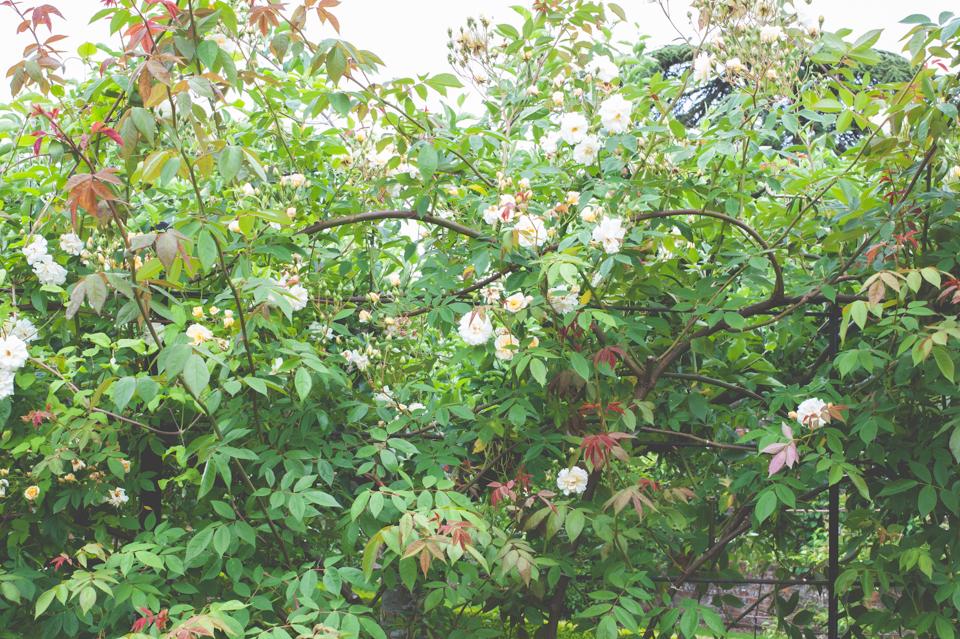West Dean Gardens-127.jpg