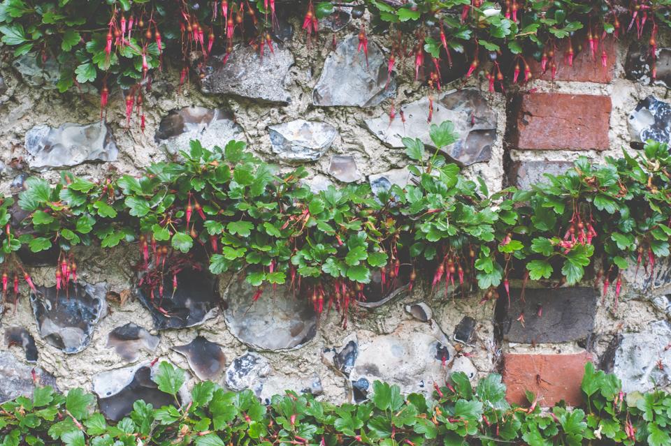 West Dean Gardens-129.jpg