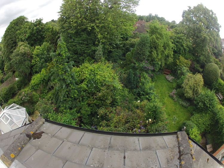 The completely overgrown garden before (view from roof looking down)