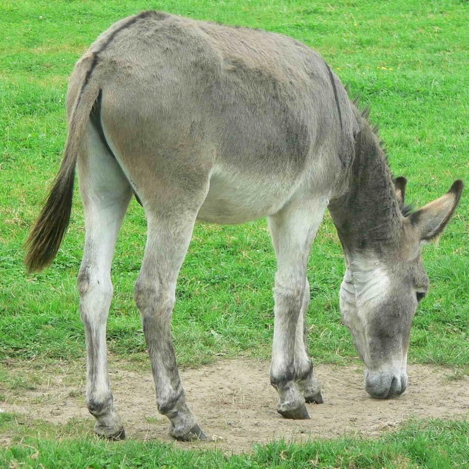 Donkey Fanny See Animal