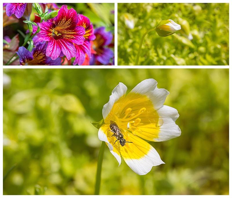 Birmingham Botanicals Gardens