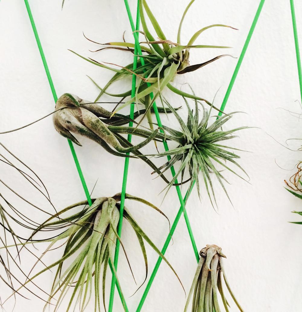plant close up.jpg