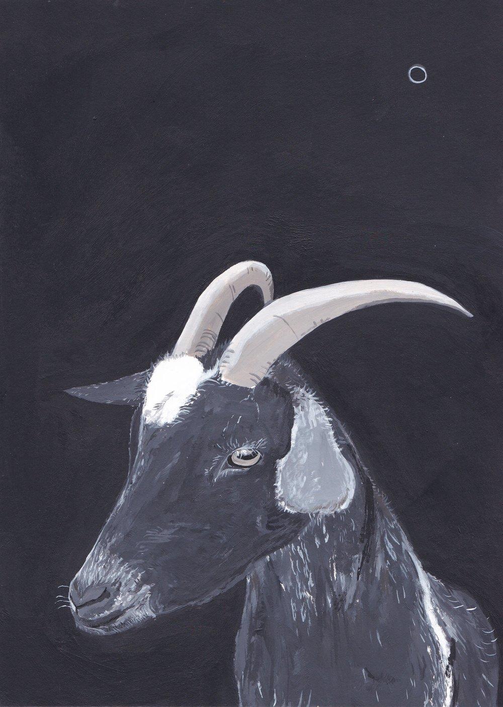Black Goat, acrylic on paper.jpg