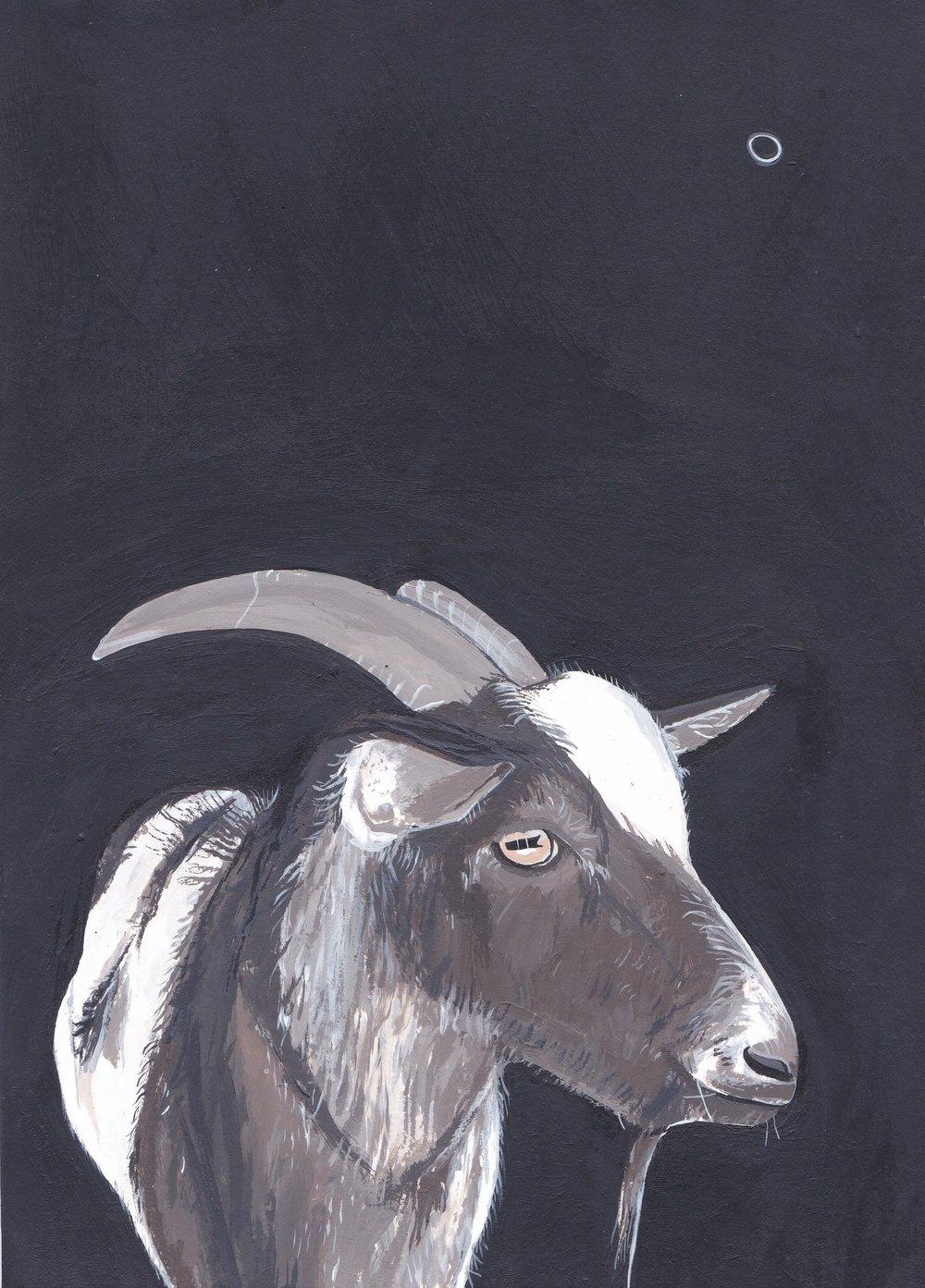 Brown Goat, acrylic on paper.jpg