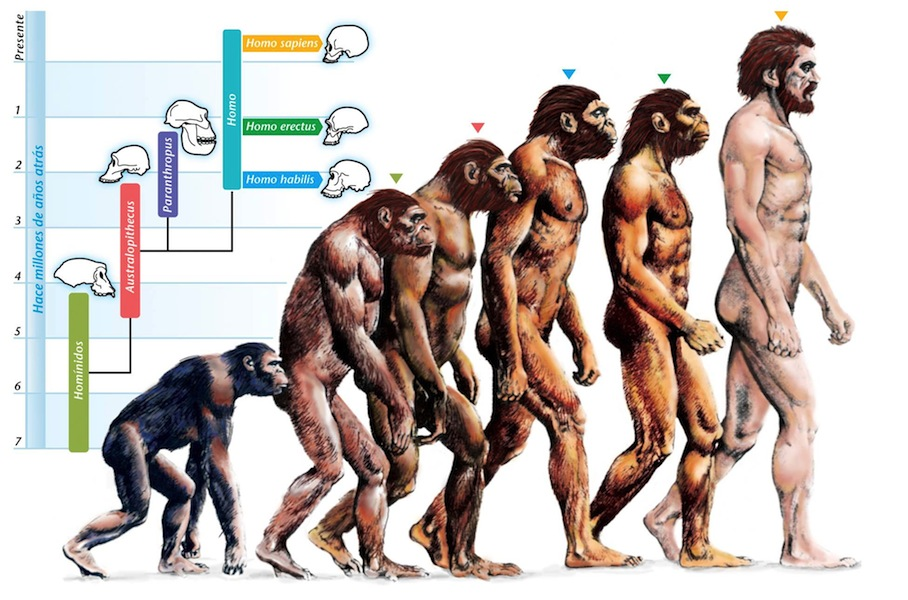 319515-evolution-evolution-of-humans.jpg