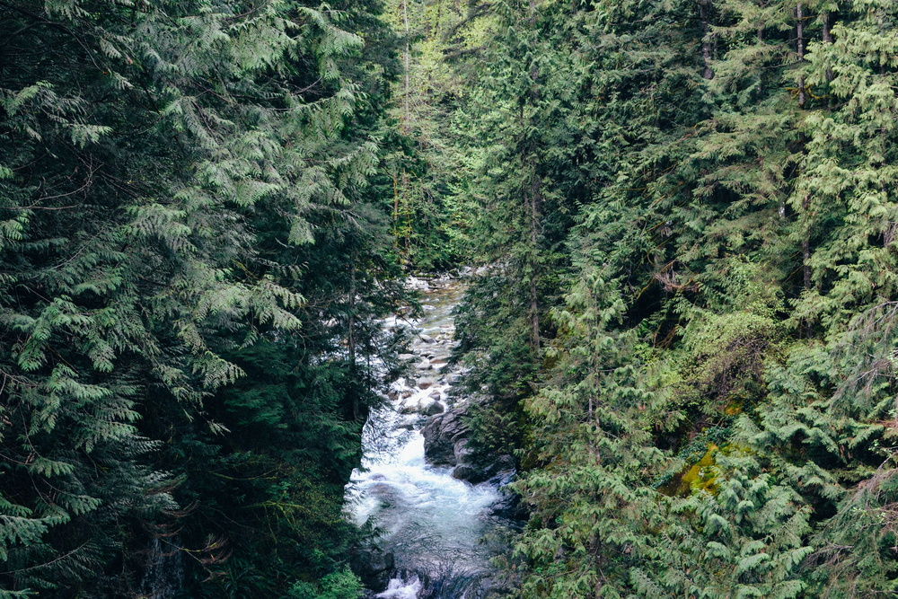 Lynn Canyon Voyage Collective