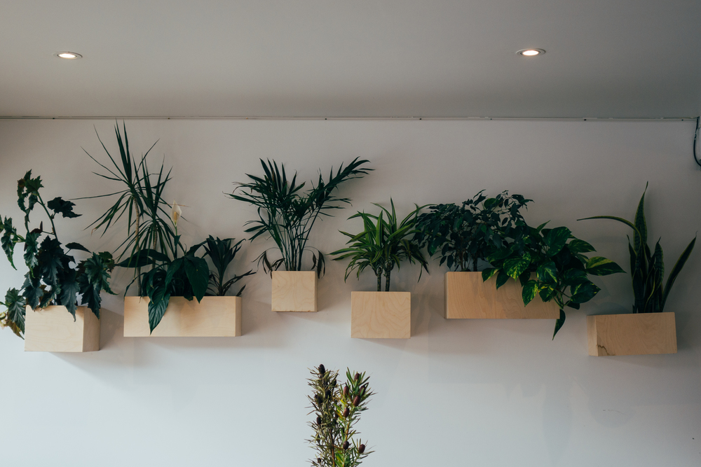 lucy lockett plants