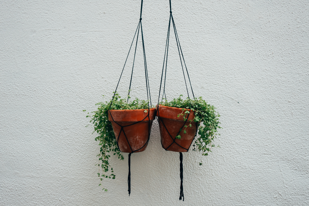 hanging plant pots voyage collective billie norman