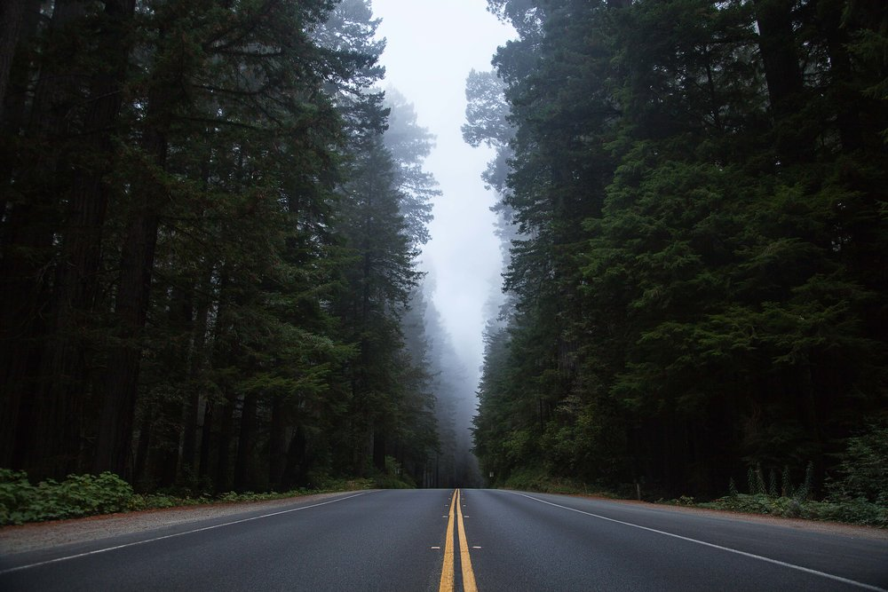 Prairie Creek Redwoods State Park California Voyage Collective Rory Armstrong