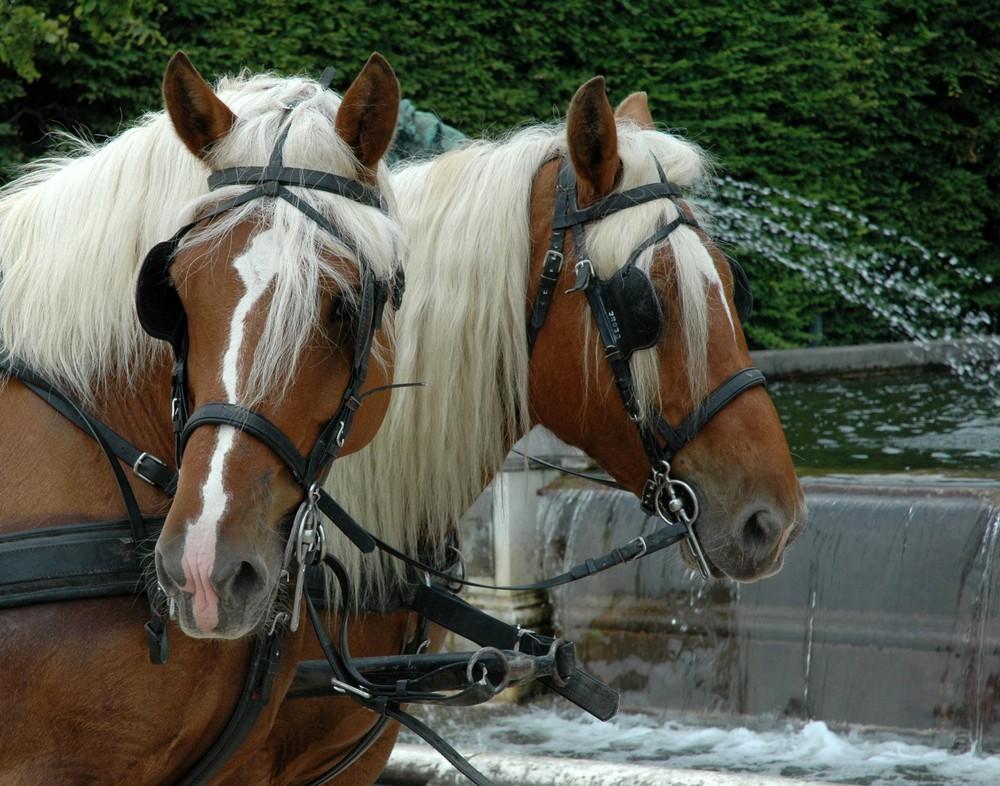 Horses Wall.jpg
