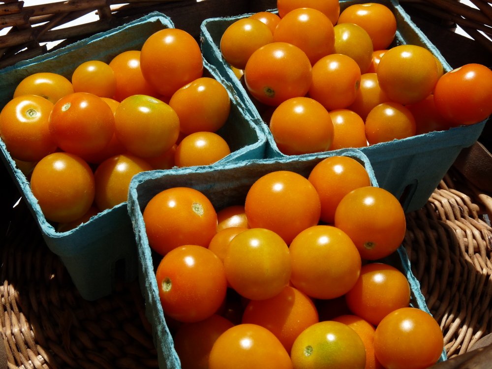 sungoldcherrytomatoes.JPG