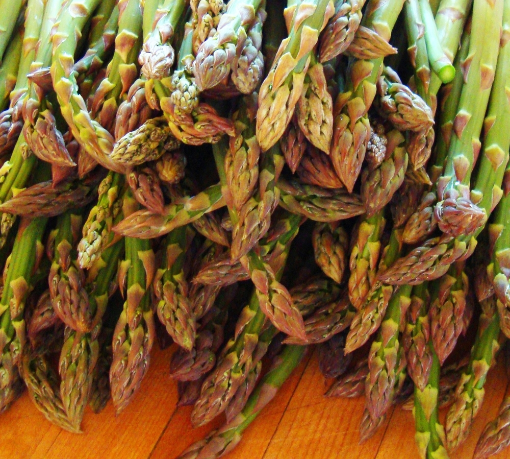 asparagus closeup may 2012.JPG