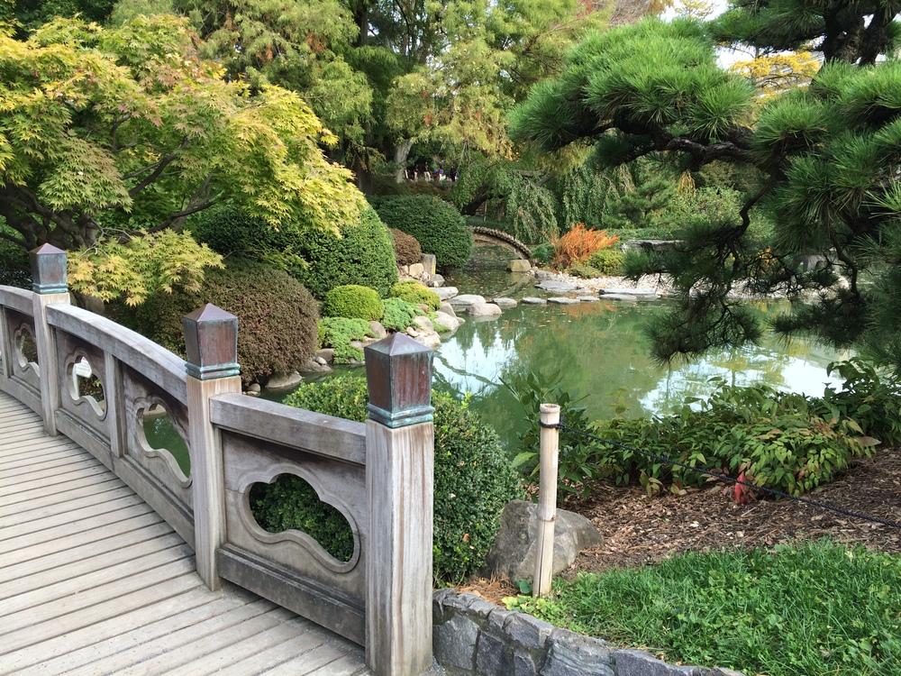 Autumn in the Japanese Garden — rikumo journal