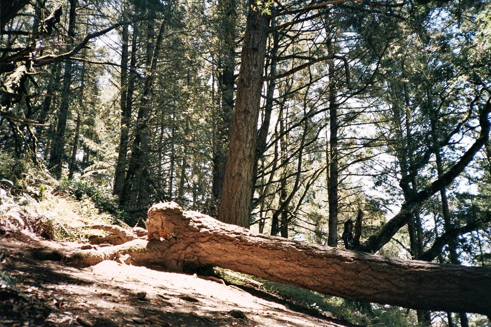 Mt Tamalpais, CA