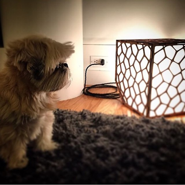 #regram from @omg__pickles. apparently Pickles is quite pleased with with her recent #voronoi lamp acquisition. #lasercut #lighting by #SmithFactory #dogsForBetterLighting