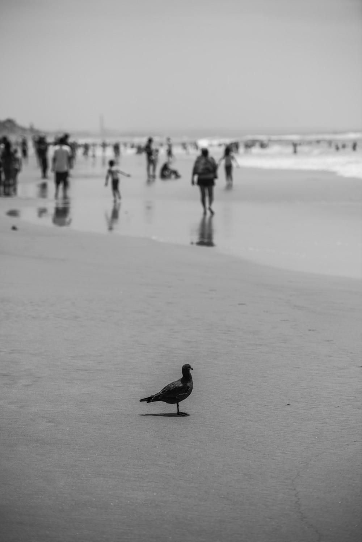 CA_Summer_2013-13.jpg