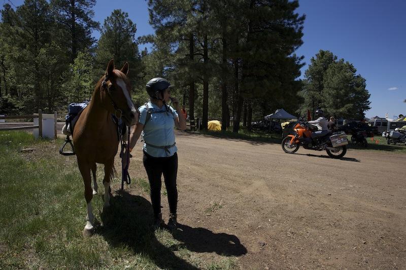 horse2.jpeg