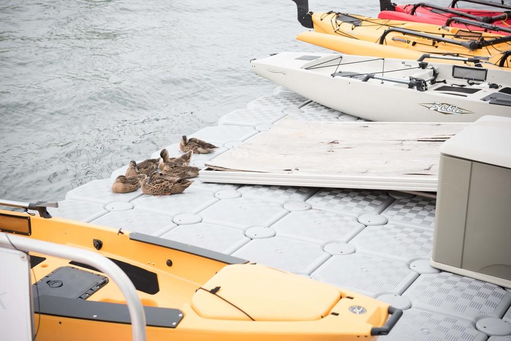 Eastport-Annapolis-Ducks