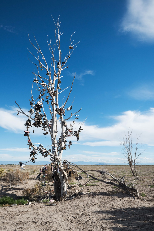 Shoe-Tree-Utah-1