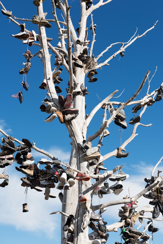 Shoe-Tree-Utah-3