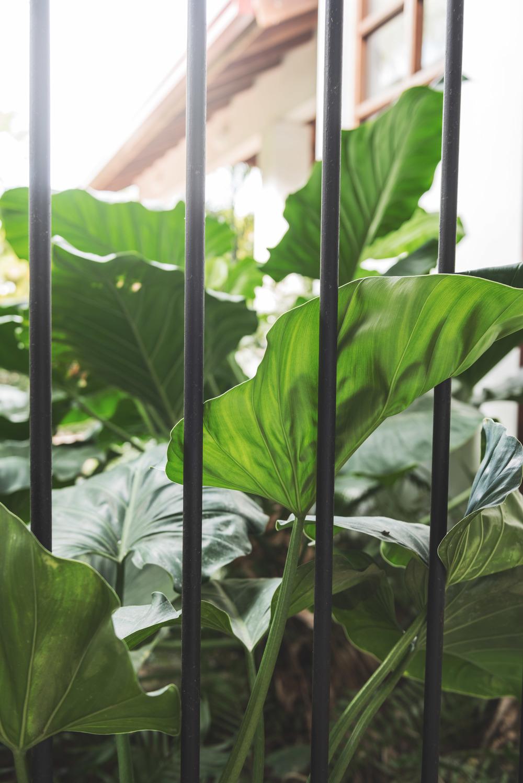 casa-leaves