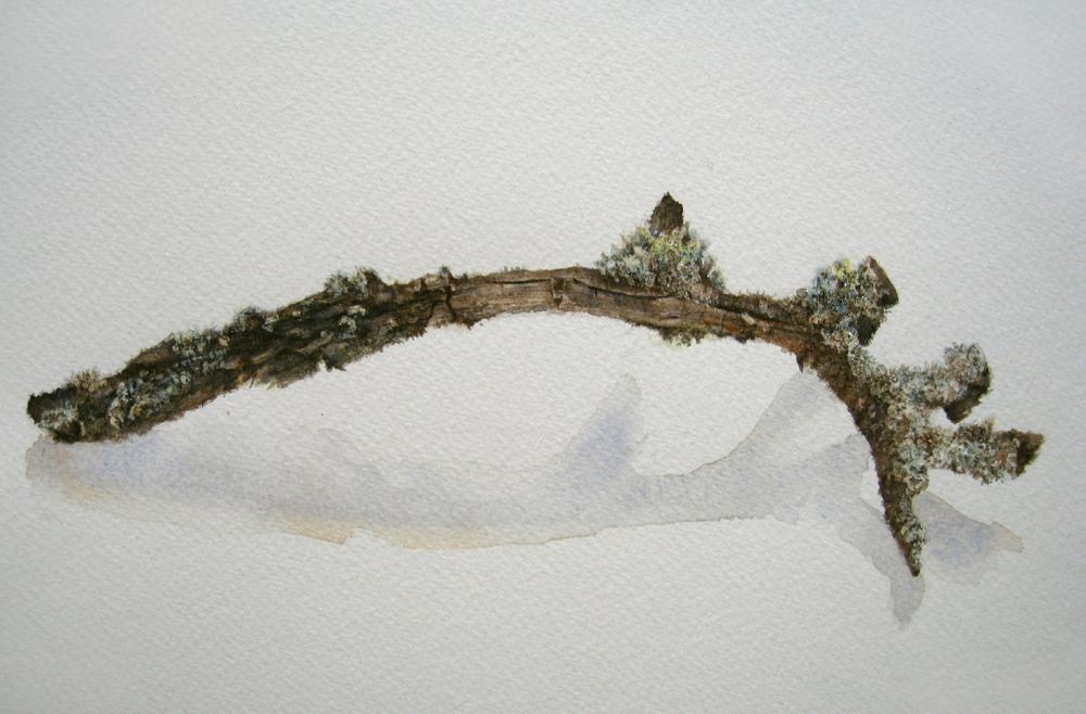 Study of a Twig