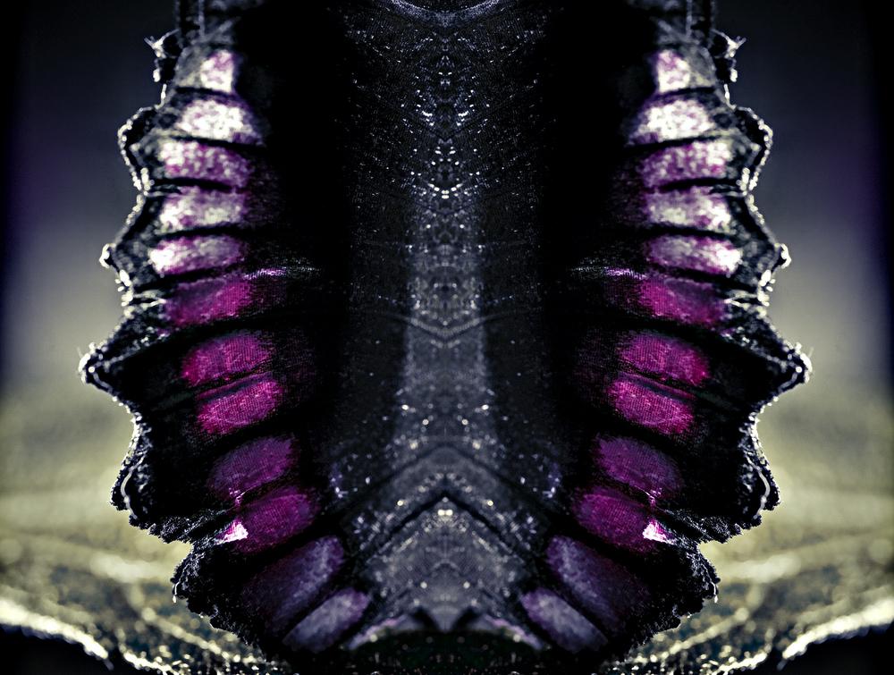 butterfly-(1-of-1)-copy.jpg