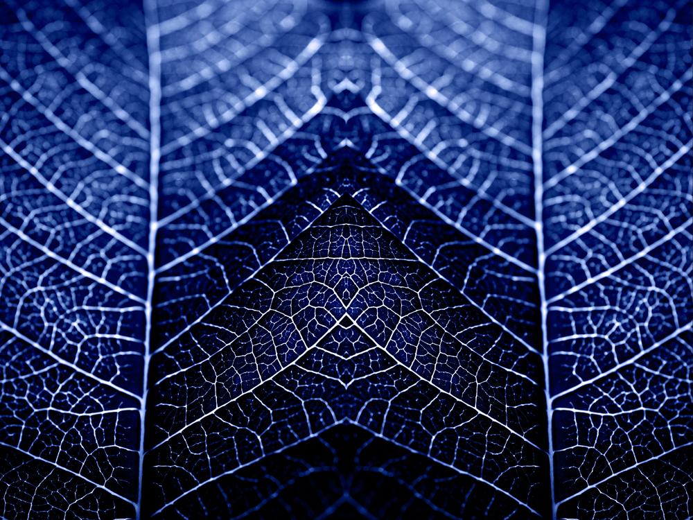 merged-leaf_MG_4654-2-copy.jpg