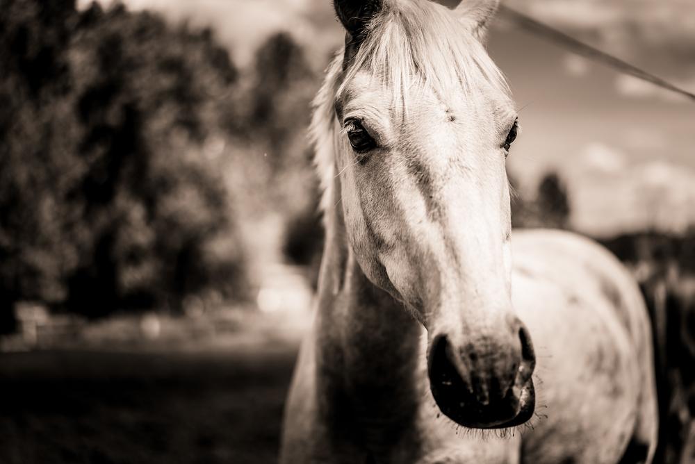 Equus (19 of 26).jpg