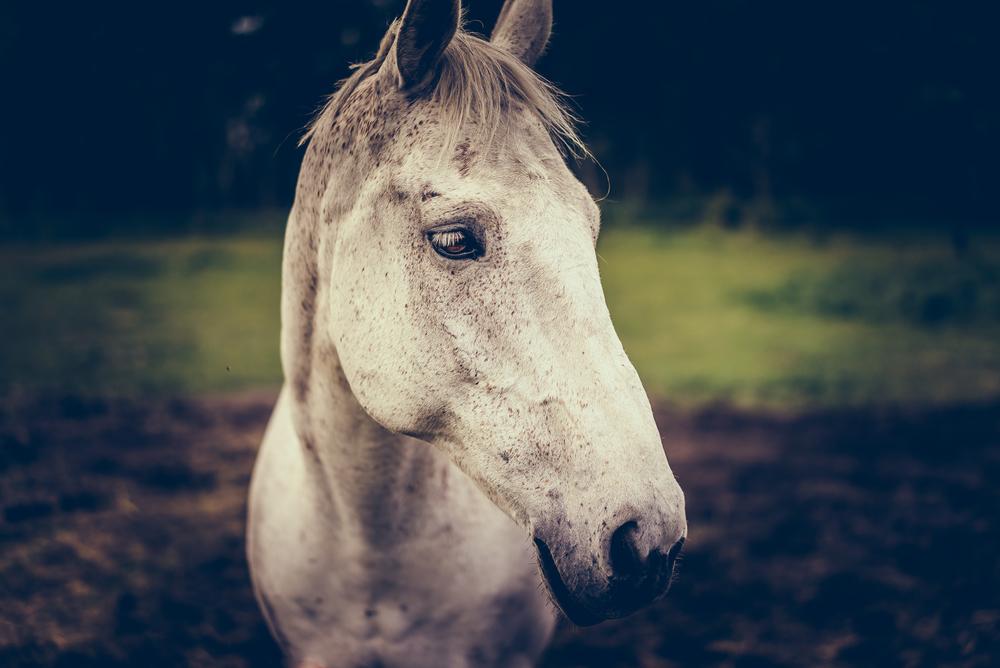 Equus (21 of 26).jpg