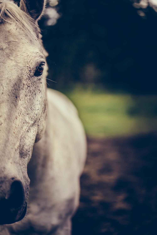Equus (24 of 26).jpg