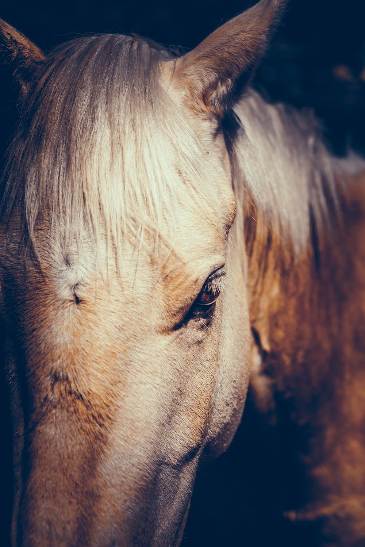 Equus (3 of 26).jpg