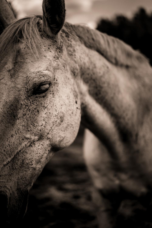 Equus (26 of 26).jpg