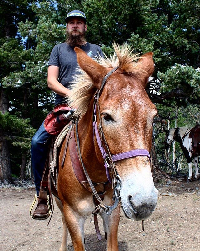 That time I hung out with Houdini the mule. I blame @muledragger  Blog post: link in bio  #mulesofinstagram #mule #mules #redtail #hardgoods #redtailhardgoods #forgedwithgrit
