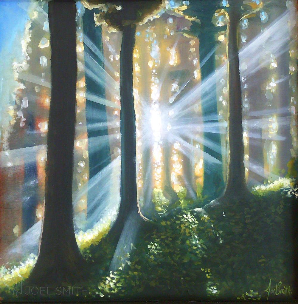 Sun_TreeForest_web.jpg