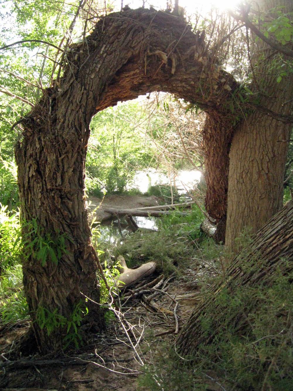 fairy-world-gateway.jpg