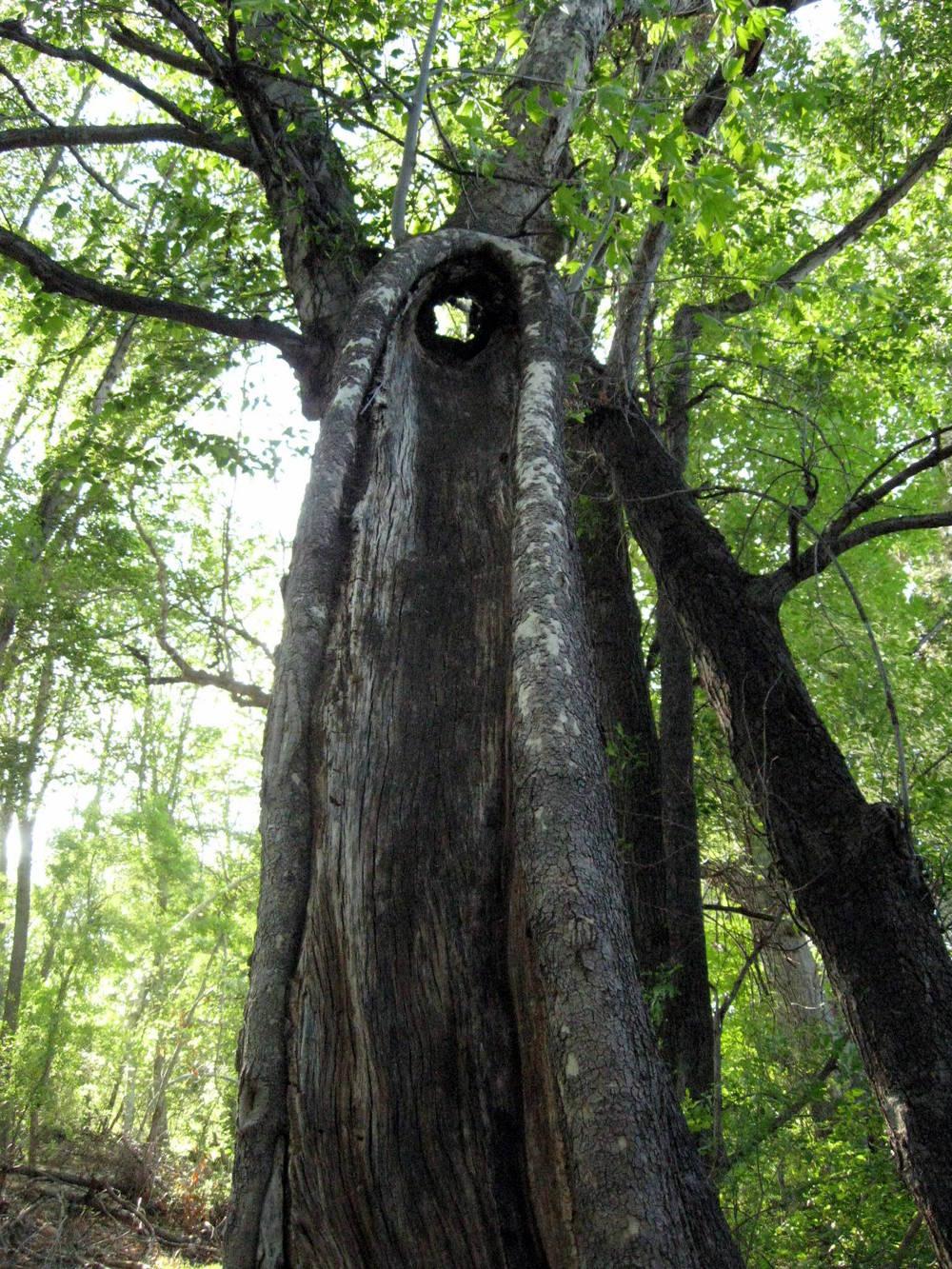 boynton-forest-oak.jpg