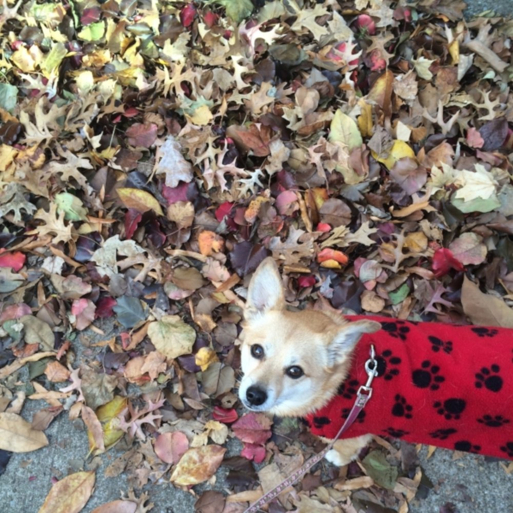 machi in the leaves.jpg