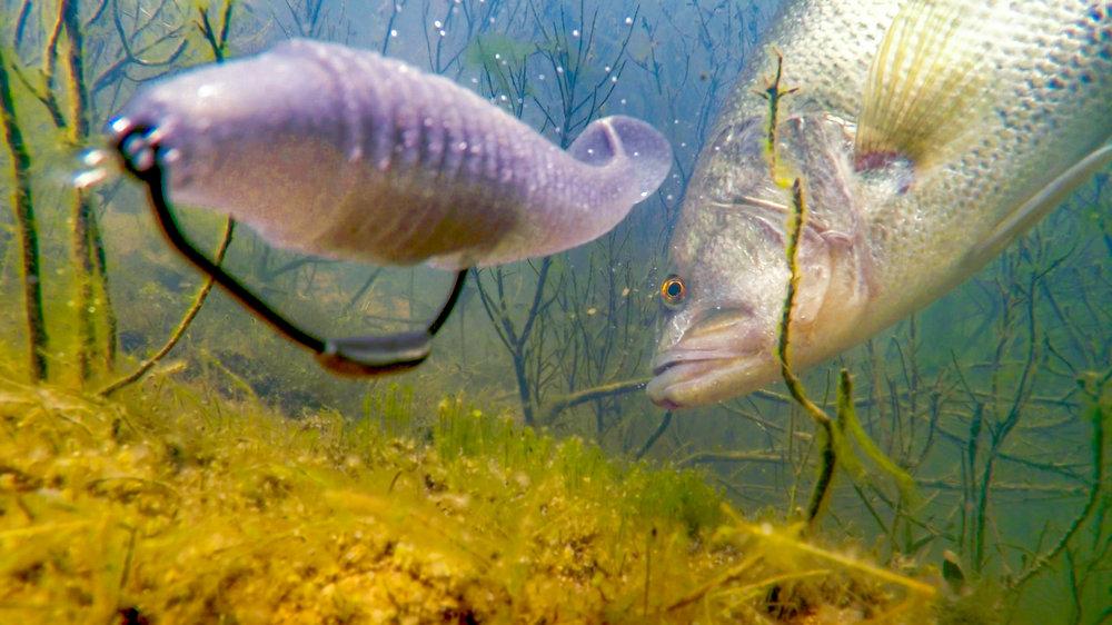 Underwater Thumb3.jpg