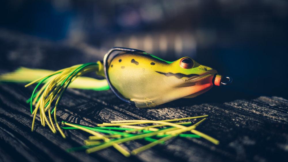 Frog Pic for matt.jpg