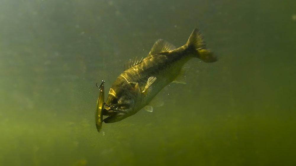 Underwater thumb.jpg