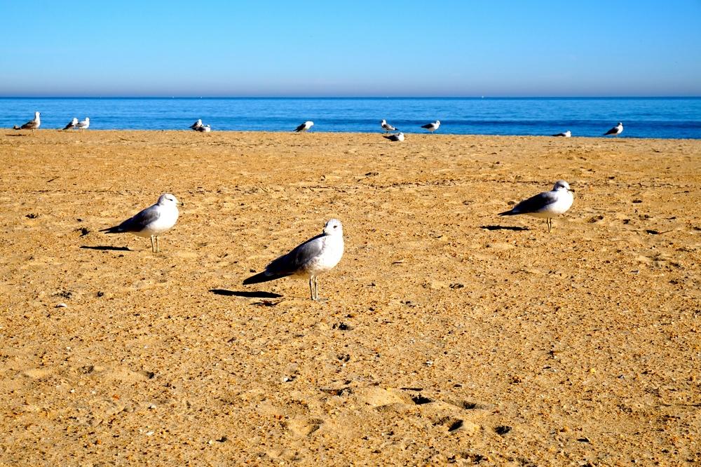 beachseagulls.jpg
