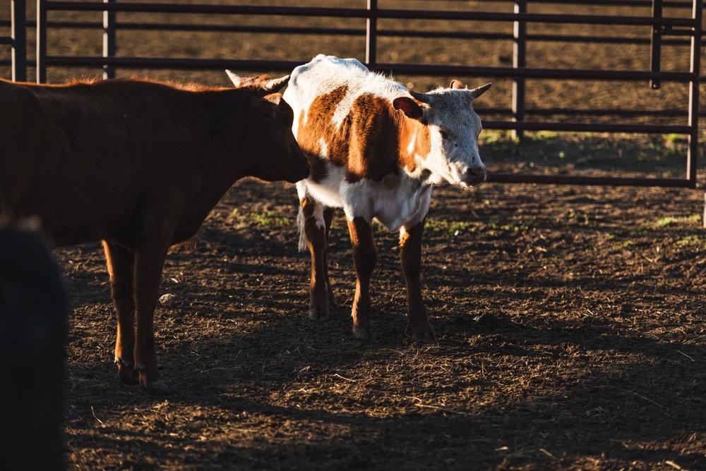rodeo_9.jpg