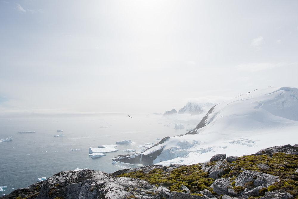 Antartica (94).jpg