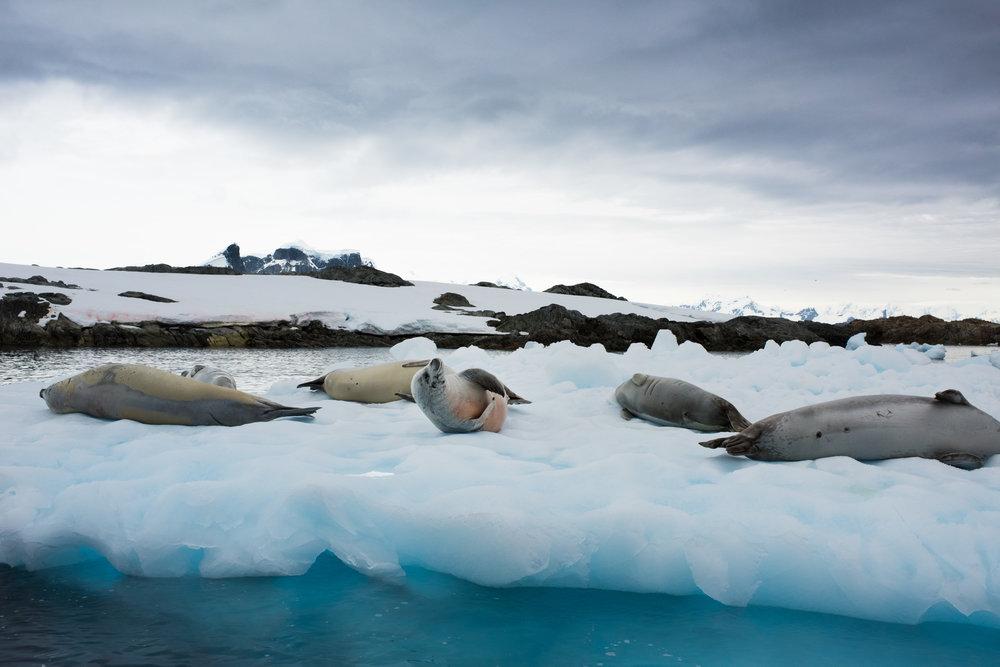 Antartica (113).jpg