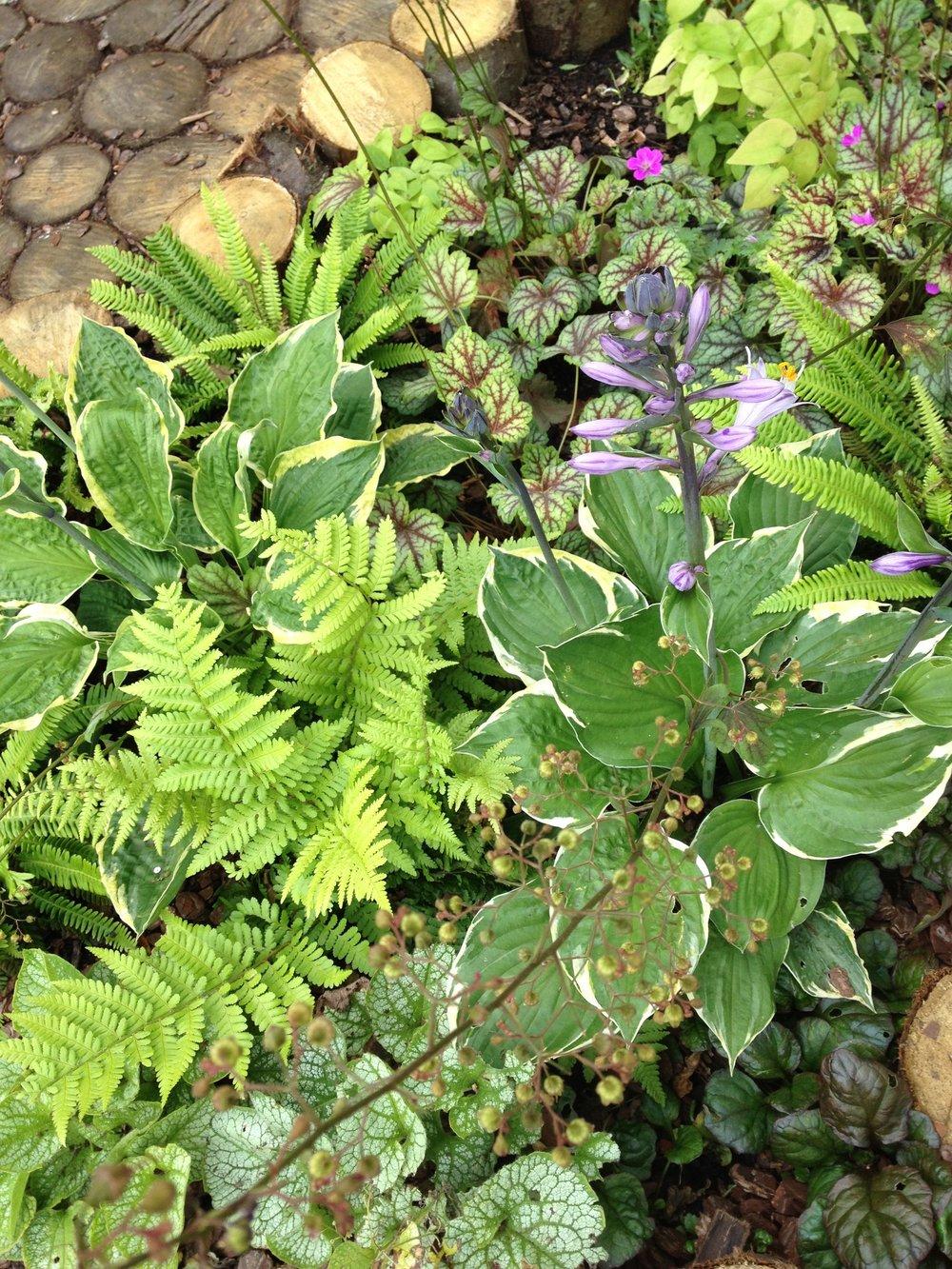 annemount school garden