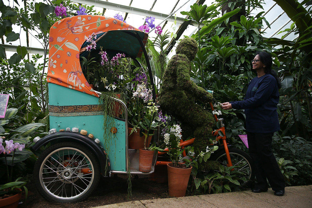 Rickshaws Orchids
