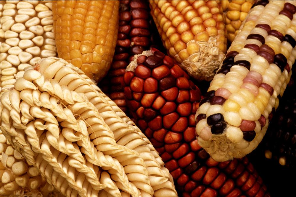 Sustainable Food Corn