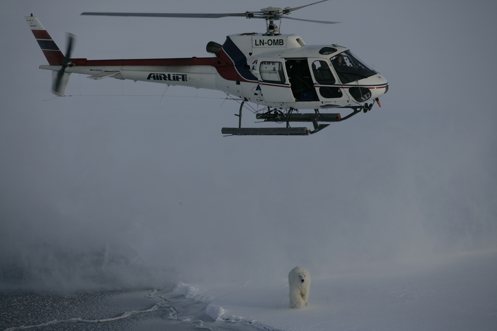 helicopter and bear Hornsund.JPG