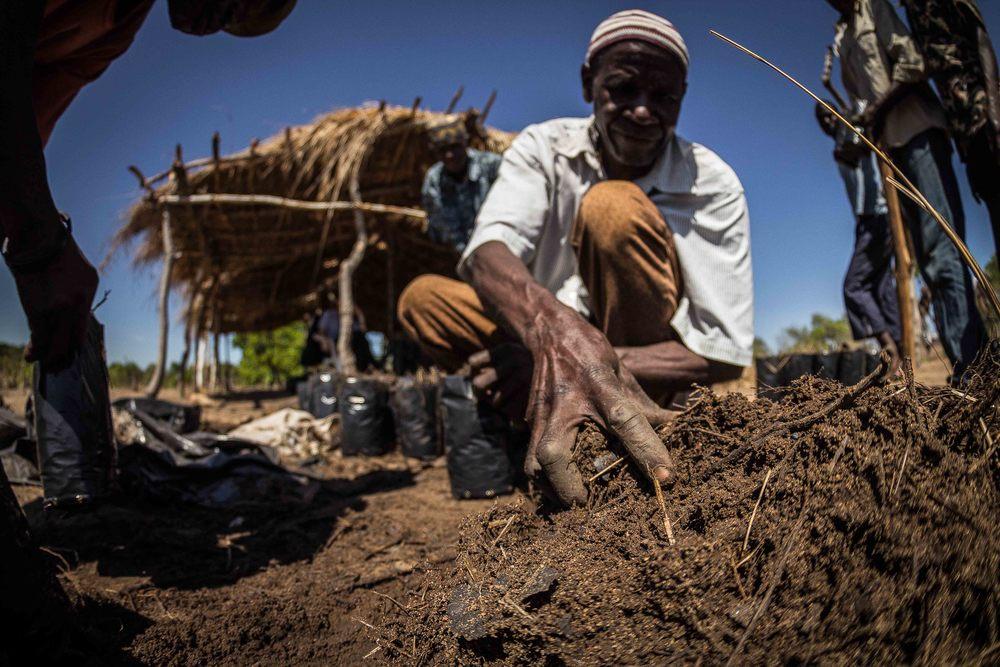 Mogovolas district, Nampula   province  – A cashew farmer fills seedling bags with Bokashi compost in order to plant seeds |  Um produtor enche composto Bokashi nos vasos para semear a castanha de cajú